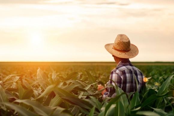 Уряд Канади викупить у фермерів надлишки продукції з благодійною метою фото, ілюстрація