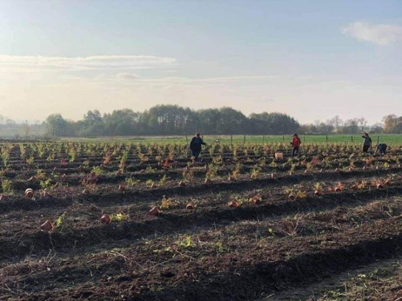 На Прикарпатті завдяки допомозі USAID висадять 6500 кущів канадської чорниці фото, ілюстрація