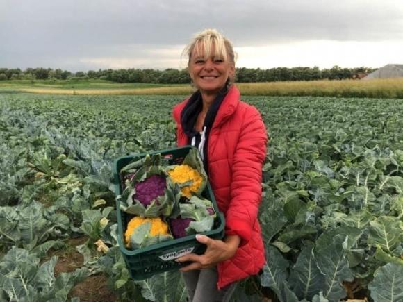 Украинские фермеры начали выращивать уникальный овощ фото, иллюстрация