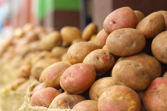 Відсутність експорту знижує ціни на українську картоплю фото, ілюстрація