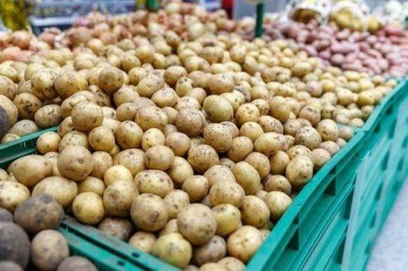 Tesco у Великобританії переходить на продаж немитої картоплі! фото, ілюстрація