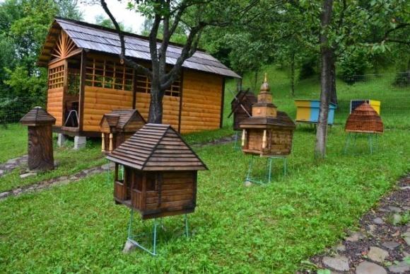 В Украине создали первую пасеку с редкими автохтонными пчелами фото, иллюстрация