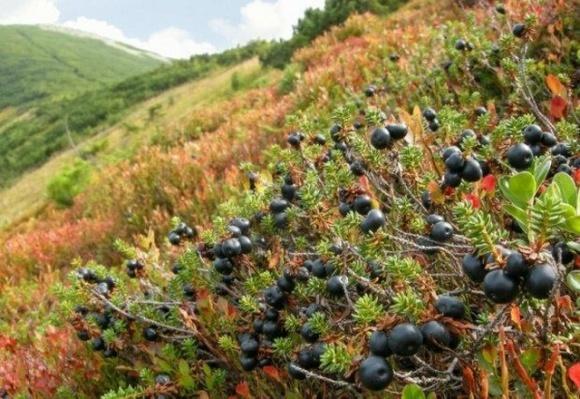 Выжить в горах: как фермер и изобретатель делают уникальную сушилку для ягод и фруктов фото, иллюстрация