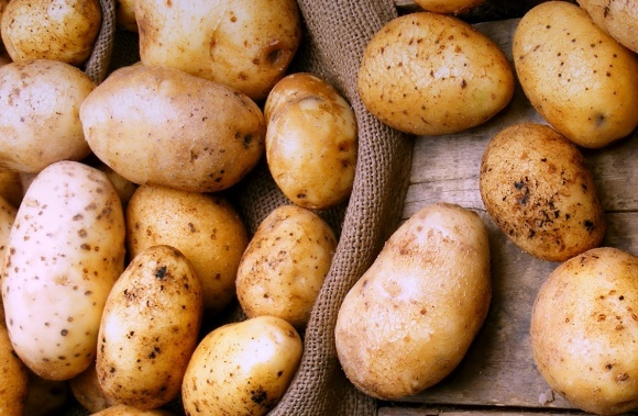 Україна втричі збільшила експорт картоплі фото, ілюстрація