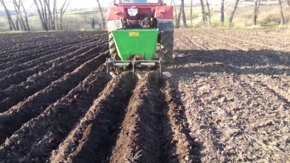 На Чернігівщині уже садять картоплю! фото, ілюстрація
