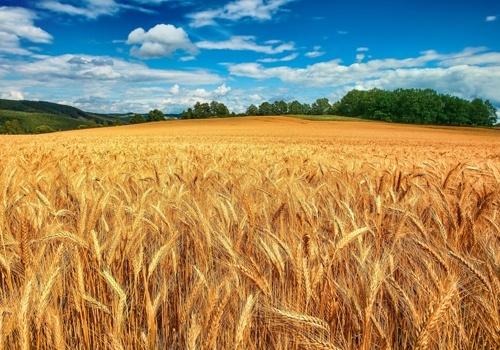 Як будуть продавати та купувати землю: новий законопроект фото, ілюстрація