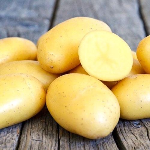 Фермери України знизили ціни на картоплю фото, ілюстрація