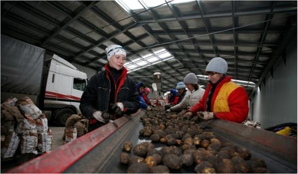 Днепропетровщина завершила уборку картофеля фото, иллюстрация