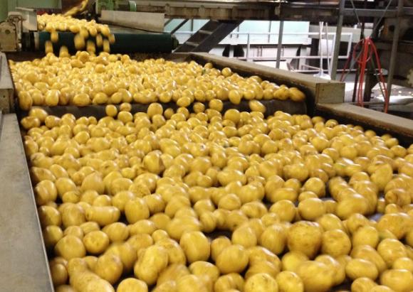Какую дополнительную стоимость с гектара может принести переработка картофеля? фото, иллюстрация