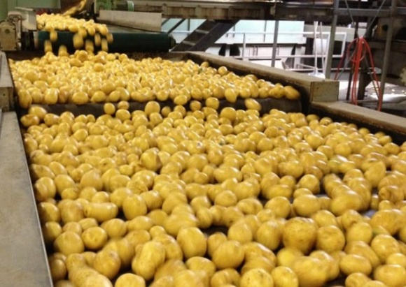 В Україні планують розвивати ринок зберігання і глибокої переробки плодово-ягідної продукції з інноваційним голландським обладнанням фото, ілюстрація