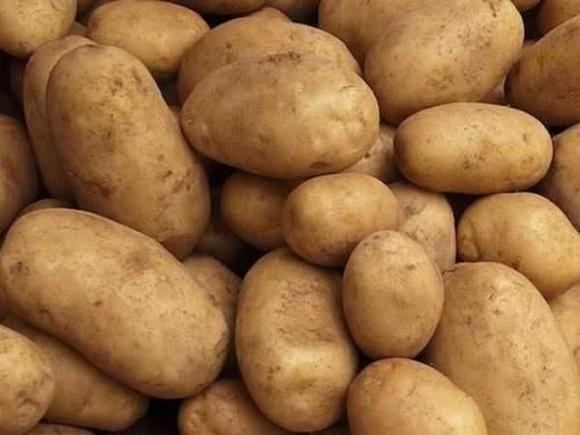 Виведено український сорт картоплі з урожайністю 100 тонн/га фото, ілюстрація