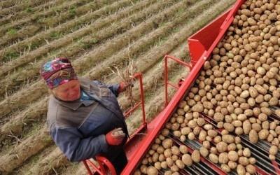 На Миколаївщини аграріїв навчають, як вести плодоовочевий бізнес фото, ілюстрація