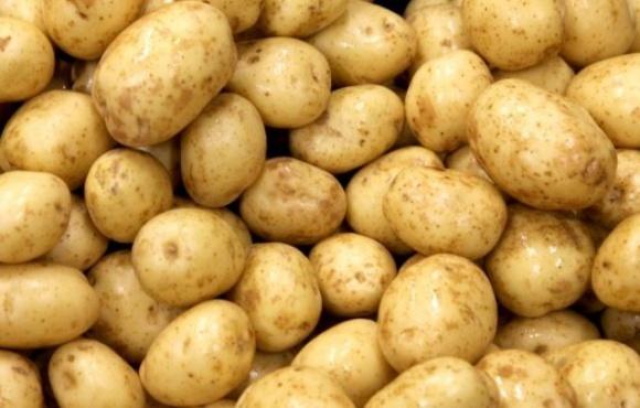 На Львовщине построят завод по переработке картофеля фото, иллюстрация
