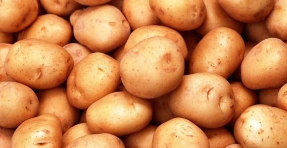 Украинские картофелеводы не могут экспортировать продукцию в Евразийский Экономический Союз из-за отсутствия тест-систем в государственных лабораториях фото, иллюстрация