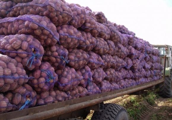 Ріст цін на українську картоплю призведе до збільшення її імпорту фото, ілюстрація