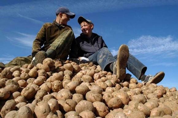 Дефіцит картоплі та патова ситуація з яблуками, - Ярмак фото, ілюстрація