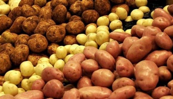 Украина за год почти на треть нарастила импорт картофеля фото, иллюстрация