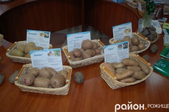 На Волині науковці презентували сортову картоплю та готові поділитися насінням фото, ілюстрація