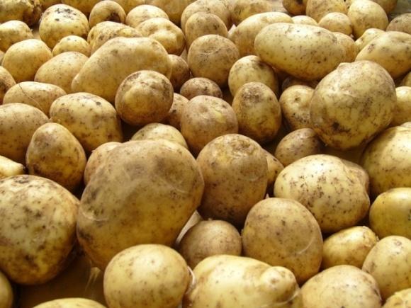 За период хранения картофель в Украине подешевел в 1,5 раза фото, иллюстрация