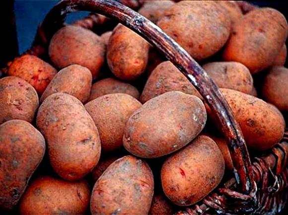 Украина увеличила импорт картофеля в 5,6 раза фото, иллюстрация