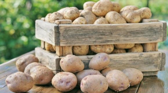 Агролайфхак: як правильно зберігати картоплю фото, ілюстрація
