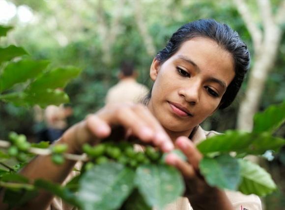 ФАО допоможе латиноамериканським фермерам краще справлятися з наслідками зміни клімату фото, ілюстрація
