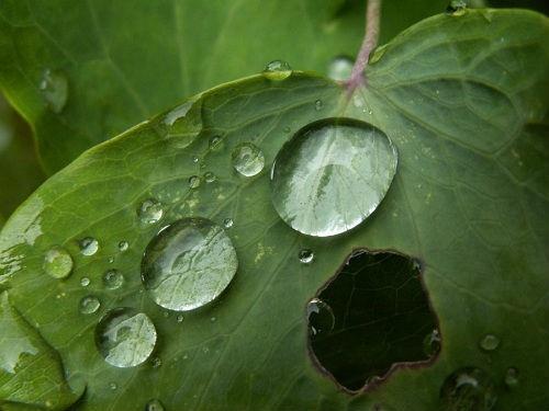 Кислотні дощі врятували Землю від глобального похолодання фото, ілюстрація