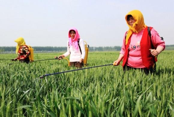 Производство пестицидов в Китае продолжает снижаться фото, иллюстрация