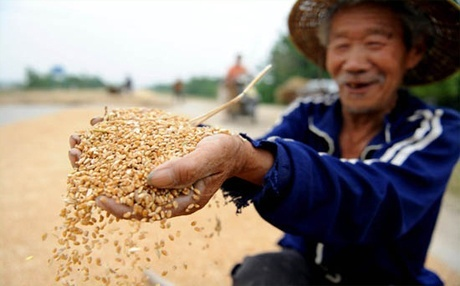 Украина планирует открыть пшеничный рынок Китая и Вьетнама фото, иллюстрация