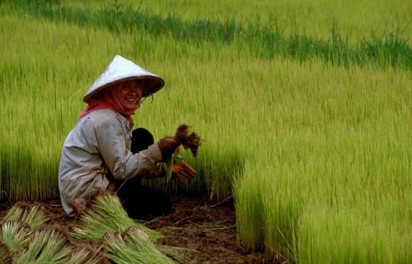 Китай запустил госпрограмму по замене химудобрений на органические фото, иллюстрация