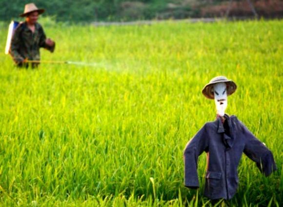 Китайские ученые разработали «умный» пестицид фото, иллюстрация