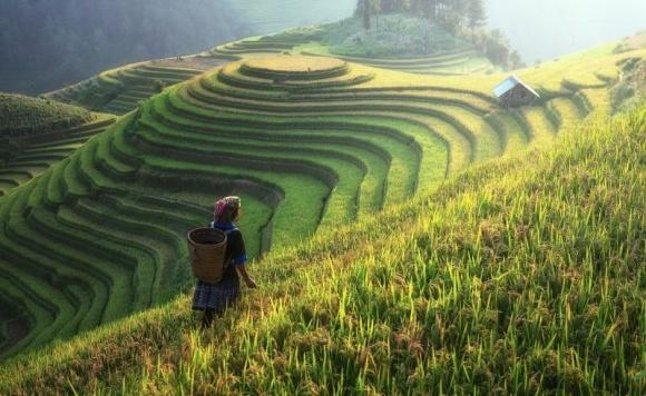Китайська провінція Цзянсу оголосила про заборону на виробництво пестицидів фото, ілюстрація