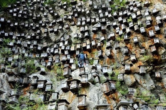 Почему китайский мёд мешает украинскому экспорту? фото, иллюстрация