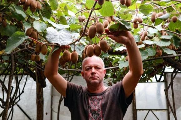 Фермер из Закарпатья вывел фрукт, который помог разбогатеть фото, иллюстрация