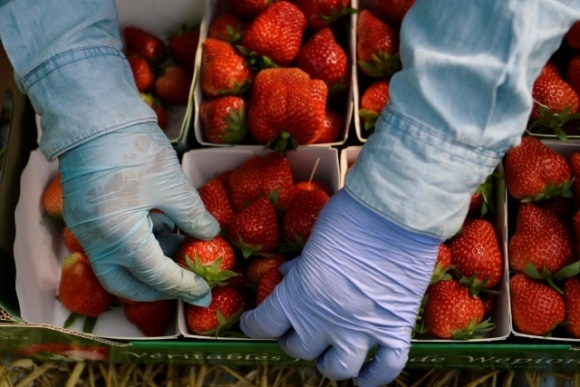 В Україні стартував сезон полуниці: скільки коштують перші ягоди  фото, ілюстрація