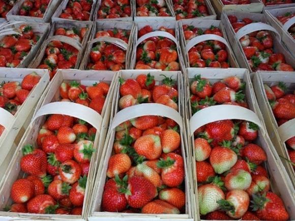 У Польщі розшукують злодіїв, які крадуть полуницю просто на полях фото, ілюстрація