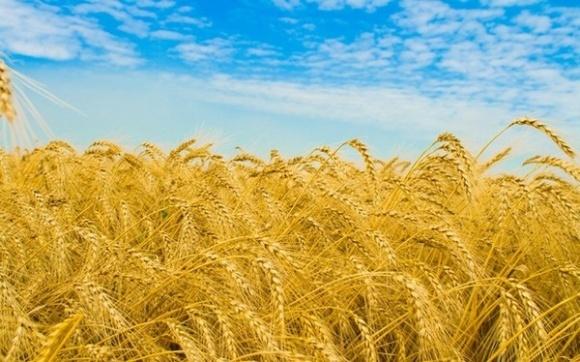 При сниженнии мирового производства пшеницы спрос остается на прежнем уровне фото, иллюстрация