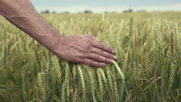 На Херсонщине ожидают недоналив зерна. Недобор урожая составит 20% фото, иллюстрация