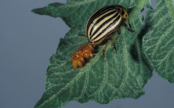 Зміна клімату: спека вдвічі знижує здатність самців комах до розмноження фото, ілюстрація
