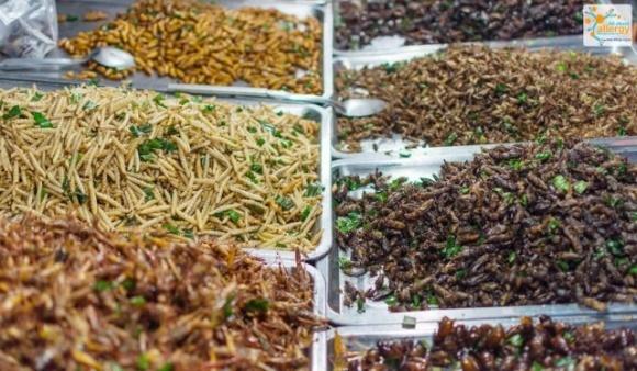Швеція дозволила продаж комах у продуктових магазинах фото, ілюстрація