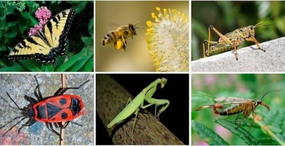 За 30 років Земля втратила 75% загальної біомаси комах і почала втрачати птахів фото, ілюстрація
