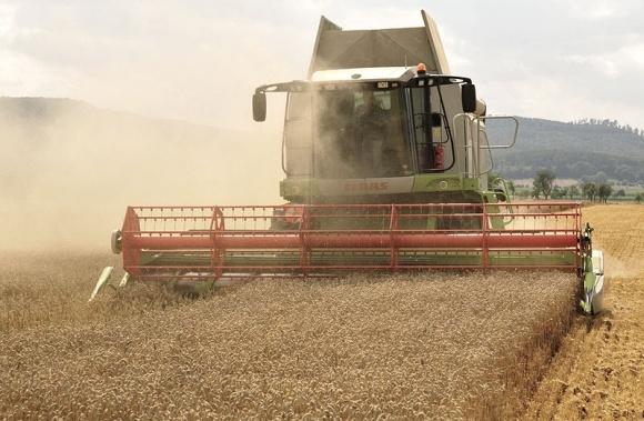 В Одесской области рекордный урожай за всю историю  фото, иллюстрация