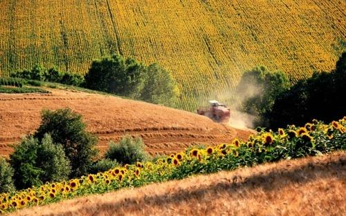 Уряд розширив напрями підтримки фермерських господарств фото, ілюстрація