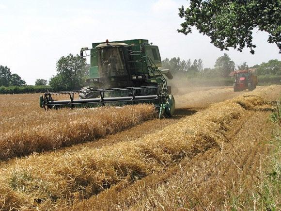 Сбор урожая продолжается. Есть рекорды фото, иллюстрация
