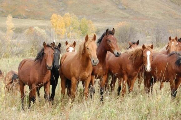 Коні не винні — на Луганщині викрили розкрадання держмайна і врожаю пшениці  фото, ілюстрація