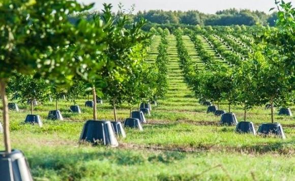 Американський фермер винайшов особливі конуси, які збільшують урожай  фото, ілюстрація