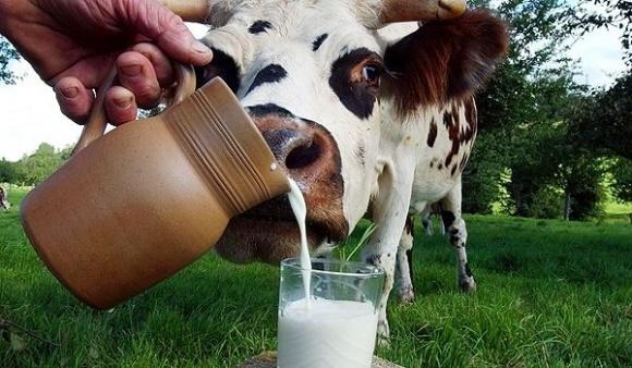 Три стратапа, которые повлияют на молочную отрасль фото, иллюстрация