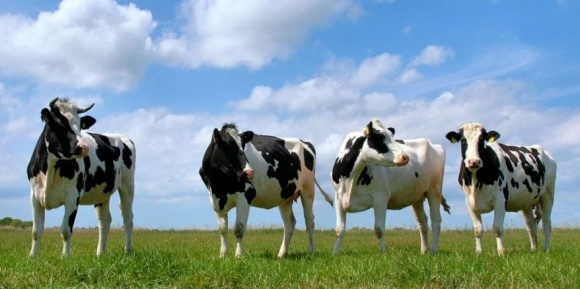 М. Мартынюк выступает за оперативную реанимацию животноводства фото, иллюстрация