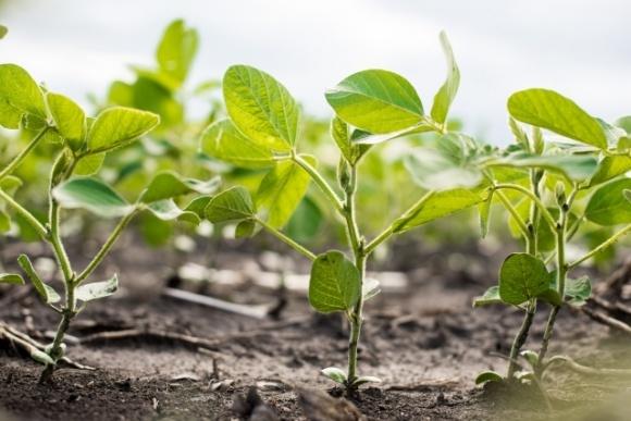 Corteva Agriscience и Symborg объявили о соглашении по азотфиксирующему продукту на основе микробов фото, иллюстрация