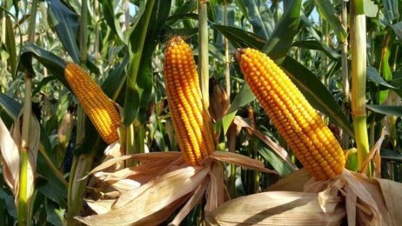 Фермери, які вирощують кукурудзу бренду Pioneer®, отримали найвищі нагороди на конкурсі врожайності NCGA (США) фото, ілюстрація